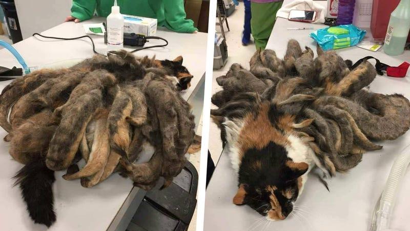 Photos via Animal Rescue League on Facebook