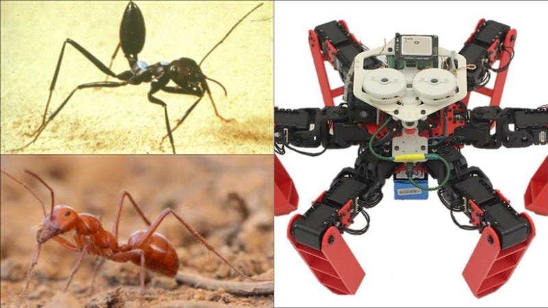 Top left, a Cataglyphis desert ant; bottom left, the Australian desert ant Melophorus bagoti; right, the AntBot.