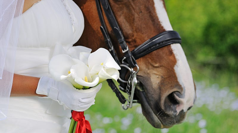 Illustration for article titled Horse Bridesmaid Cruelly Forced to Wait Outside Church During Ceremony