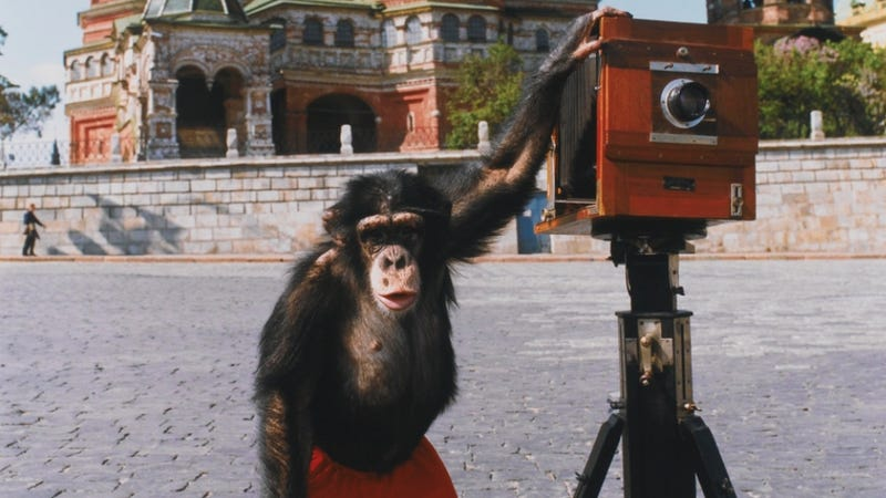 Illustration for article titled These Pics Taken by a Chimp Are Worth More Than Anything on Instagram