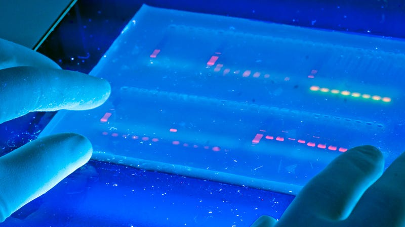 A Modified CRISPR Could Treat Common Diseases Without Editing DNA