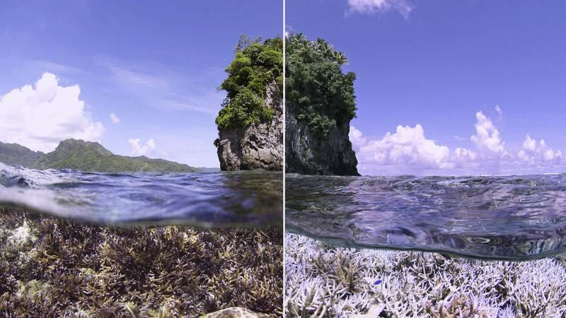 Seeing is believing in the wrenchingly illustrative climate doc Chasing Coral