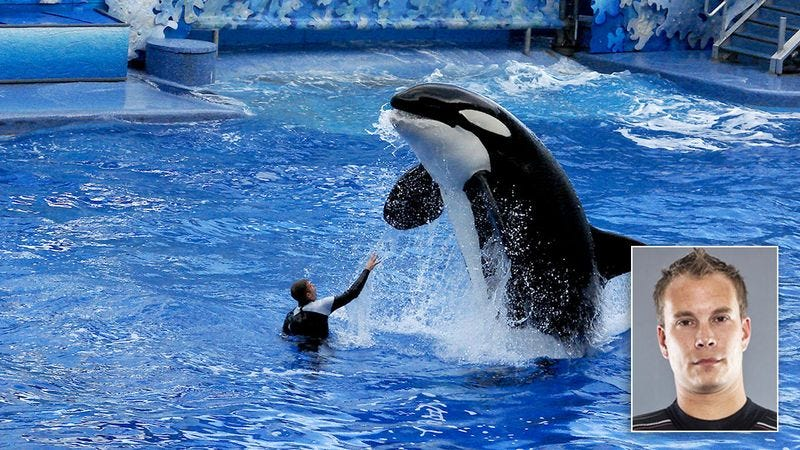 Illustration for article titled Disturbing: Ex-SeaWorld Trainer Reveals What It Was Like Getting Splashed All The Time