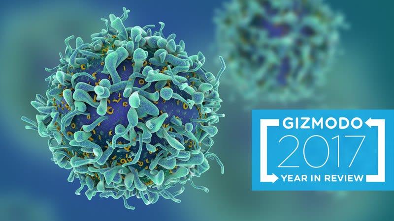T-cells. Image: Memorial Sloan Kettering Cancer Center