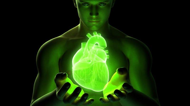 Illustration for article titled Damaged heart? We can rebuild it.