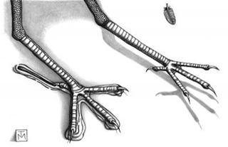 Illustration for article titled Big, 100-Million-Year-Old Bird Tracks Discovered in Australia