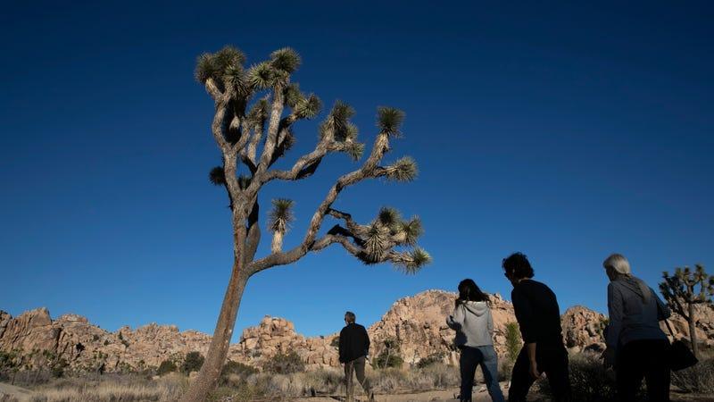 People visit Joshua Tree National Park in Southern California's Mojave Desert, Thursday, Jan. 10, 2019.