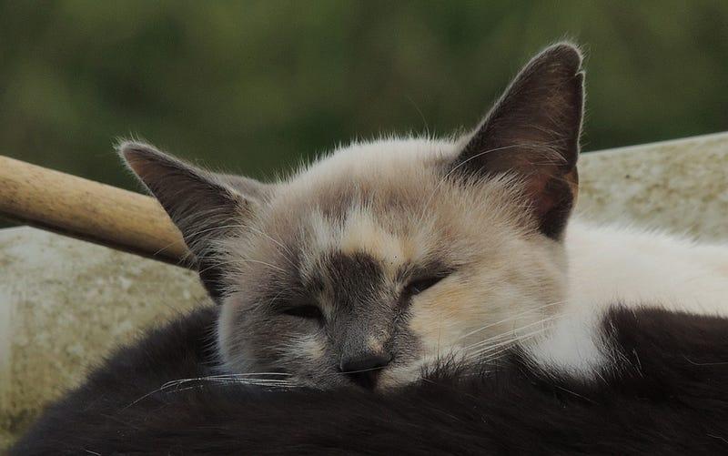 Illustration for article titled Alguien ha decapitado cerca de 500 gatos en Inglaterra en menos de tres años, y el número no para de crecer
