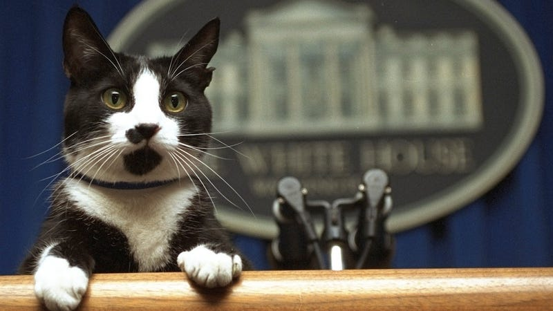 Illustration for article titled There's Been a Secret White House Cat for Years