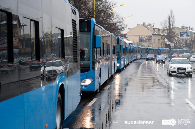 Illustration for article titled Bilikék, de igen dögös buszkígyó érkezett Budapestre