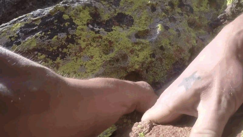 La cámara de un escalador ascendiendo sin cuerdas graba cómo cae en picado 20 metros (y sobrevive)
