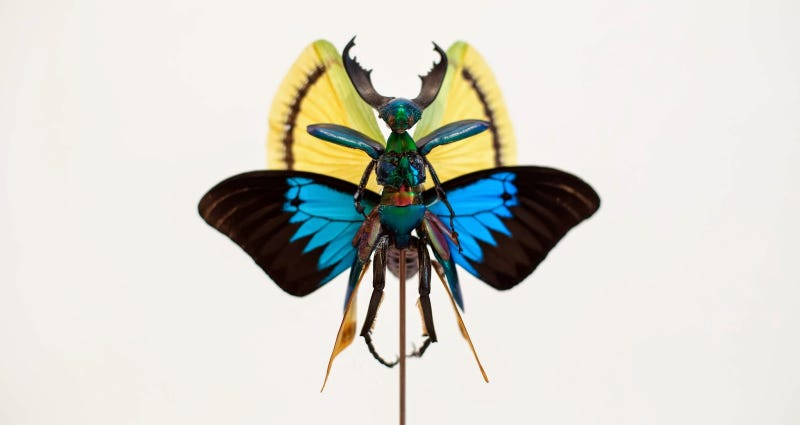 Illustration for article titled The Most Majestic Fairy Sculptures We've Seen Are Made Out Of Insects