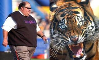 Illustration for article titled Mangino Vs. A Tiger: Who Ya Got?