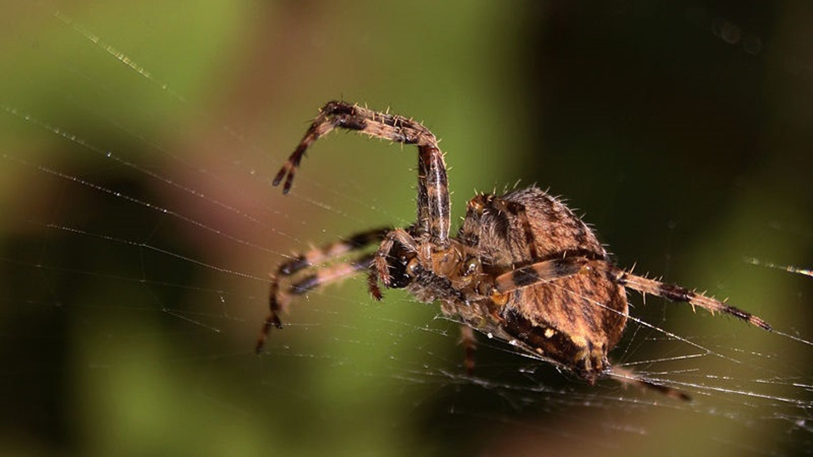 Here\'s How Spiders React When They Get a Dose of Venom