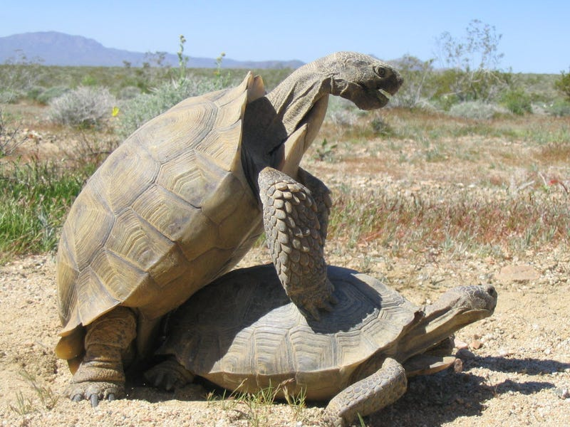 """analysis of the tortoise and the The story """"the tortoise and the hare"""" shows us that even if a person has a natural disadvantage in a challenge he or she can still succeed if they work hard and."""