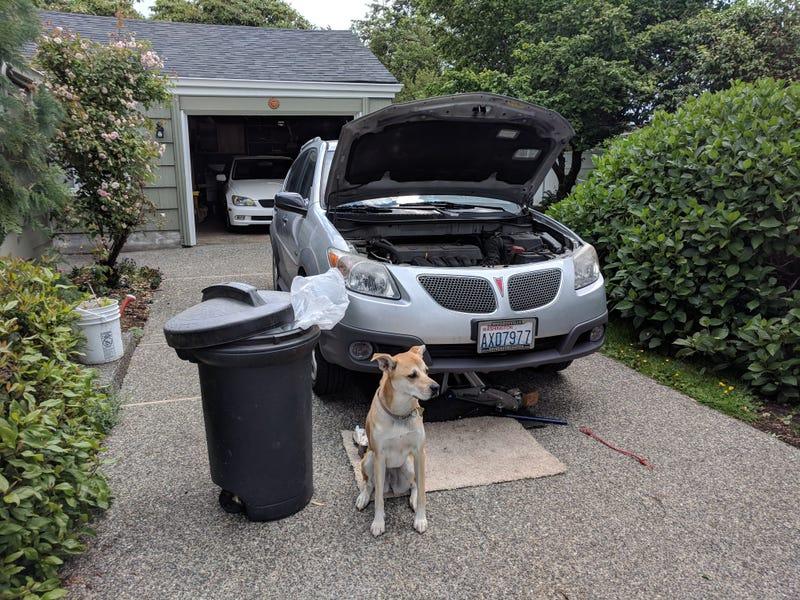 Illustration for article titled Rebadged Corolla hatchback update