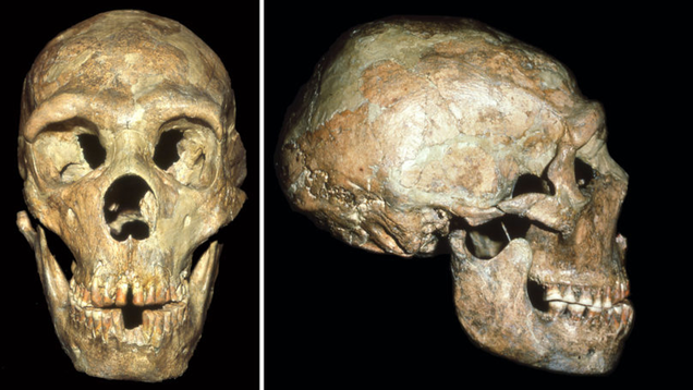 Neanderthals With Disabilities Survived Through Social Support