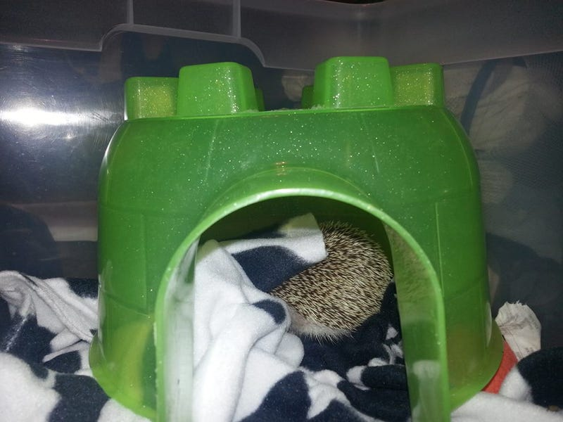 Illustration for article titled I have been asked about Spike's Igloo, so behold!