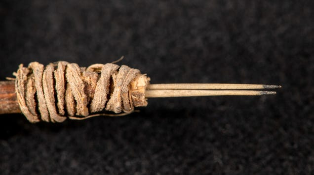 2,000-Year-Old Tattoo Tool Found in a Washington Storage Closet