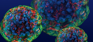Illustration for article titled Scientists Retract Groundbreaking Stem Cell Study
