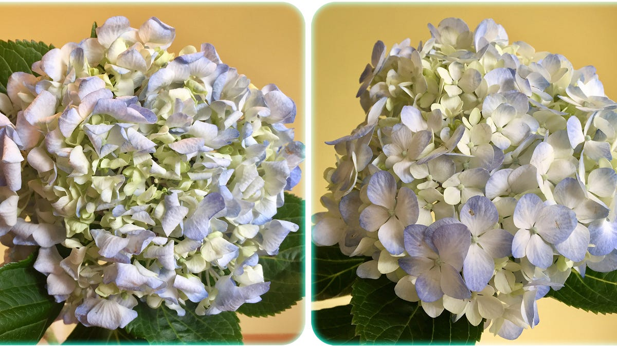 How to revive dead flowers izmirmasajfo Image collections