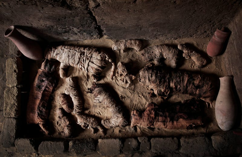 Mummified cats inside a tomb, at an ancient necropolis near Egypt's famed pyramids in Saqqara, Giza, Egypt.