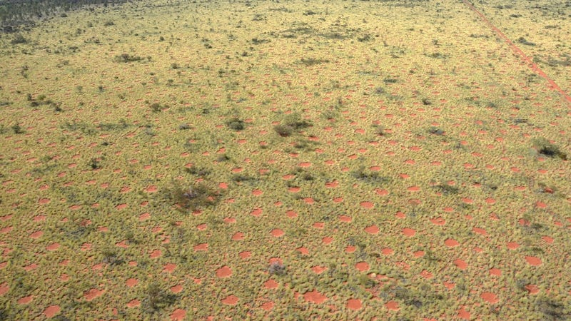 Fairy circles in Australia near Newman. Image: Kevin Sanders