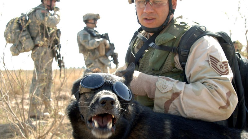 Illustration for article titled DARPA Plans To Scan Puppy Brains To Find the Smartest Dogs for War