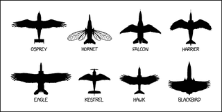 Illustration for article titled The Ultimate Avian Spotter Guide: How To Tell Which Bird To Speed-Check