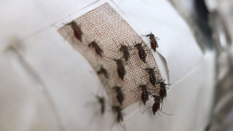 Illustration for article titled Agregar grafeno a los tejidos y las prendas lo convierte en un campo de fuerza perfecto contra los mosquitos