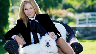 Illustration for article titled Flight Attendant Gets Stitches After Bite From Barbra Streisand's Dog