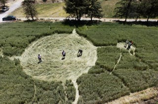 Illustration for article titled Mysterious crop circles discovered on Tasmania