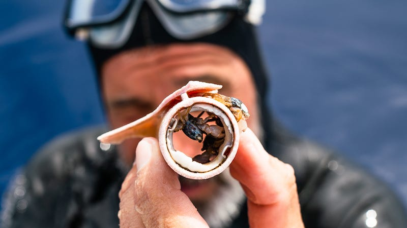 El nadador Ben Lecomte observa a unos cangrejos dentro de un pedazo de plástico.