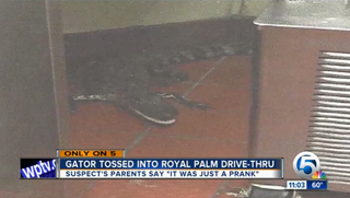 An image of the alligator that was thrown into the Wendy's drive-thru in October 2015 in Royal Palm Beach, Fla.WPTV screenshot