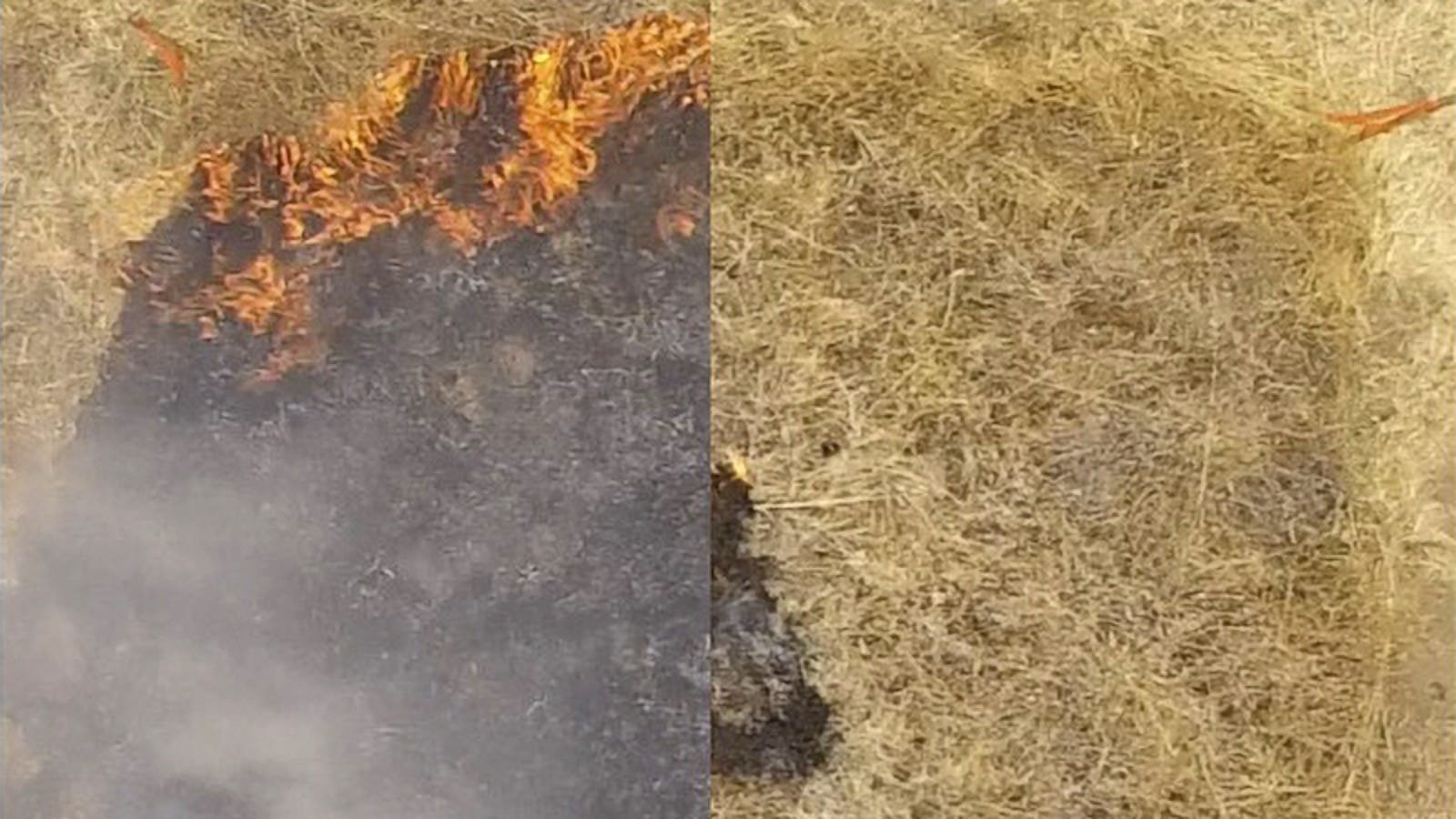 A New Spray-On Gel Could Help Stop Wildfires Before They Start, Researchers Say