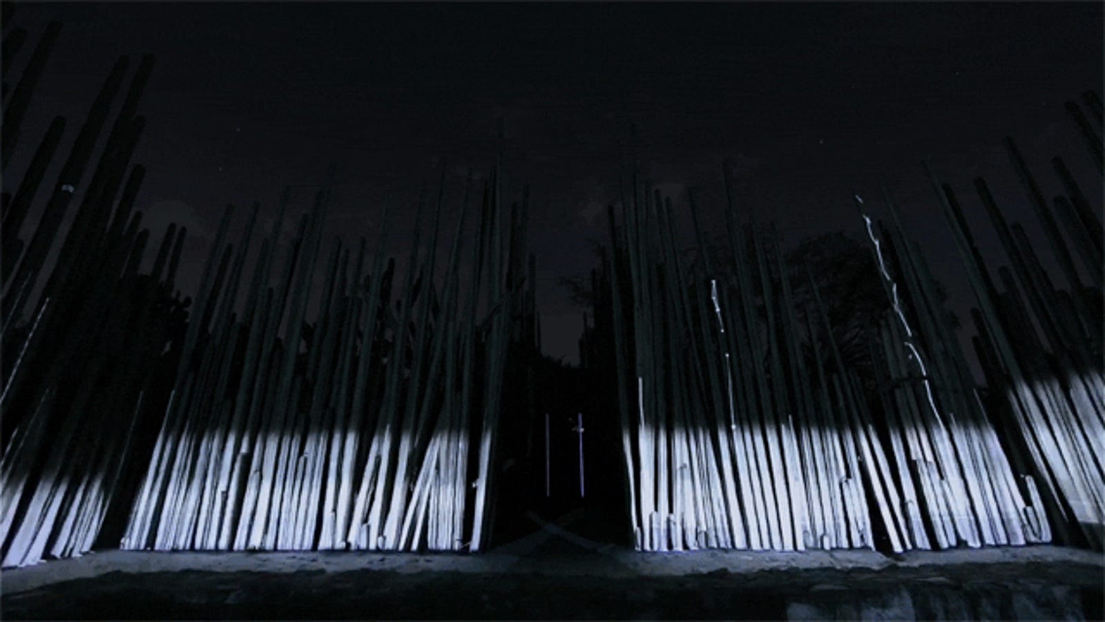 Watch an enchanted forest come to life in a dancing light show
