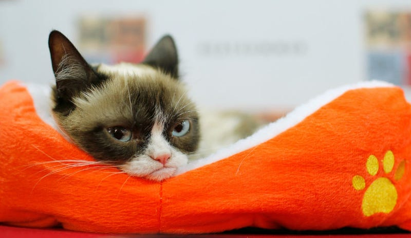 Illustration for article titled Peer Into Grumpy Cat's Soul and Caption This Photo