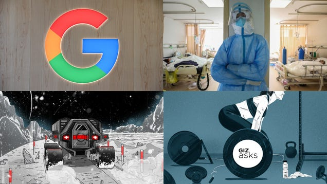 Influencer Arrests, Sea Eagles Torturing Bats and HIV Drugs to Treat Coronavirus: Best Gizmodo Stories of the Week