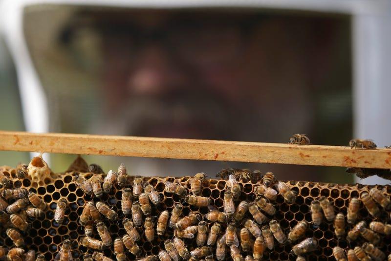 Illustration for article titled Mueren más de 500 millones de abejas en Brasil en tres meses, y la razón es un peligro para el planeta