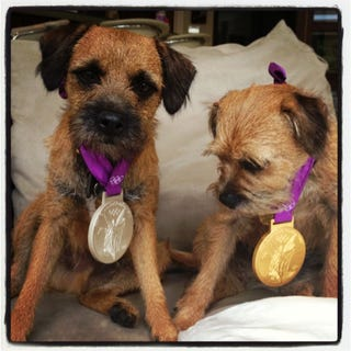 Illustration for article titled Here Are Andy Murray's Adorable Puppies Wearing His Olympic Medals, Because Puppies