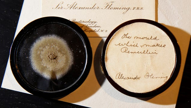 90-Year-Old Mold Sold for Almost $15k