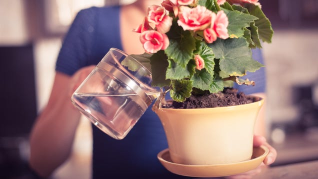 Should You  Water  Your Plants With Leftover Coffee (and Other Drinks)?