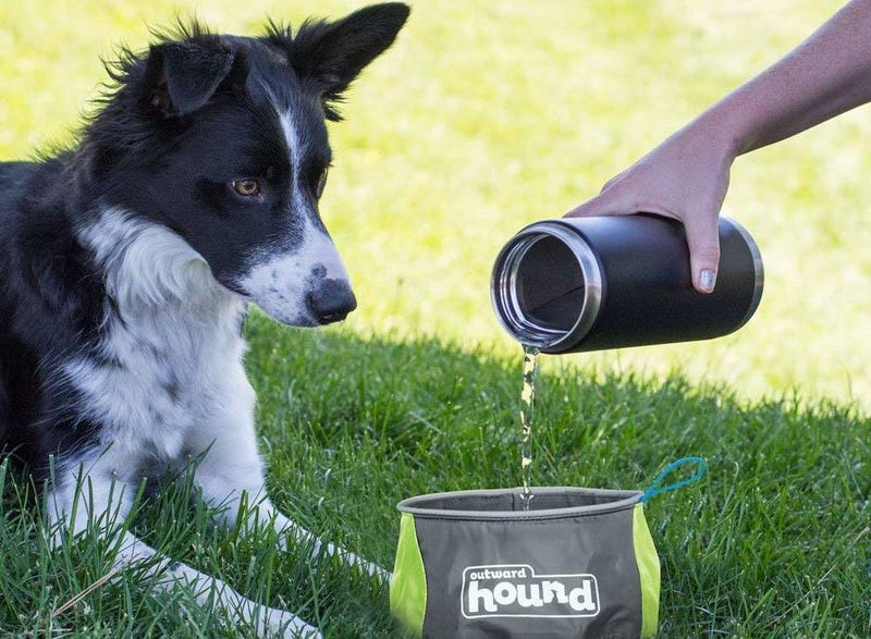 Outward Hound Port-A-Bowl Collapsible Dog Travel Bowl for Food and Water | $3 | Amazon