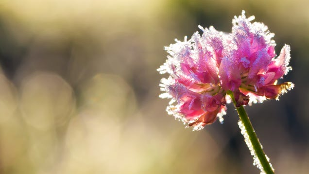 What to Do if a Late Frost Damages Your Plants