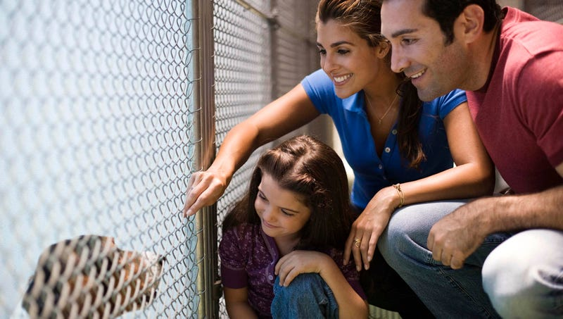 Illustration for article titled Pet Adoption Tips