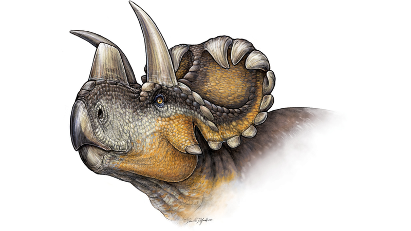 Illustration for article titled IntroducingWendiceratops, a Spectacular New Horned Dinosaur