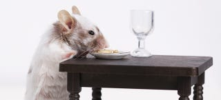 Illustration for article titled Lab Mice Got Really Unhealthy When They Only Ate Powdered Food
