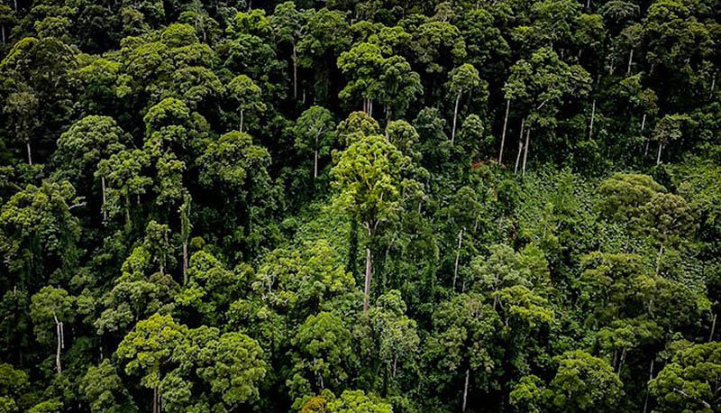 La zona de Borneo con los árboles tropicales más altos del mundo. Foto: Greg Asner / Carnegie Institution for Science