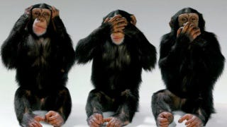 Illustration for article titled Chimps will follow their leader even when it's the stupid thing to do