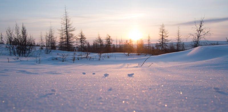 Imagen: Taiga siberiana. Oprea George / Shutterstock